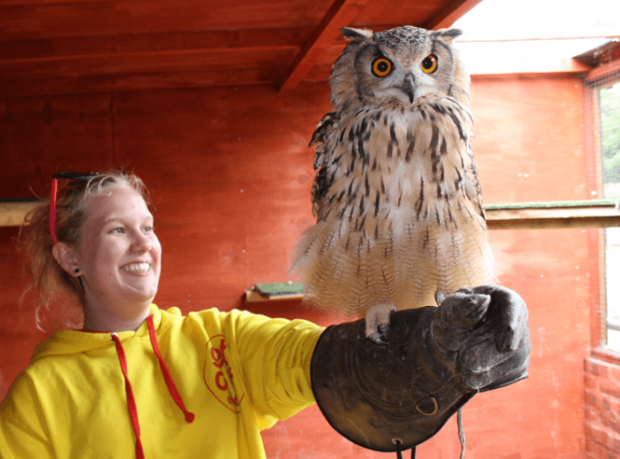 Chester Falconry & Nature Gardens