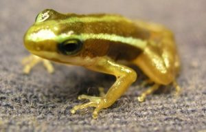 Frog Zone