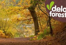 Delamere Forest